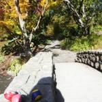 Tinis Jonglierbälle im Hagley Park, wo all dies einst begann