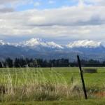 verschneite Berggipfel hinter saftigen Weiden