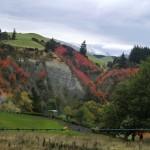 tolle Herbsttöne