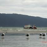 Traktoren im Meer, Boote und dicke Möwen vor Kapiti Island