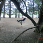 Wolfi pendelt unter Bäumen
