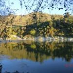 Whanganui River V