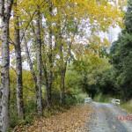 entlang des Forgotten World Highway VI (schon ziemlich herbstlich!)
