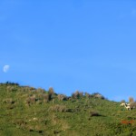 Mond über Wiese