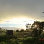 tolles Licht über Weiden I