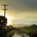 tolles Licht über Weiden III
