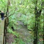 auf dem Weg zur Mangapohue Natural Bridge II