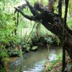 auf dem Weg zur Mangapohue Natural Bridge III