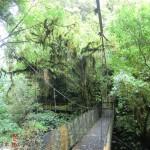 auf dem Weg zur Mangapohue Natural Bridge IV
