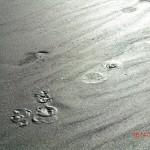 Te Puia Hot Springs Strand: es blubbert unter der Oberfläche