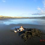 Te Puia Hot Springs Strand: Ja, heiße Quelle gefunden und eigenen Pool gebaut :-)
