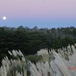 Mondaufgang über den Sanddünen III