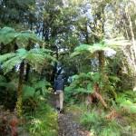 kurzer Regenwald-Walk mit Aki und Lennart, Jackson Bay