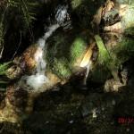 pletschernder Regenwald-Bach