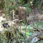 Grab mitten im Wald