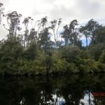 toller Regenwald-Walk, Ship Creek