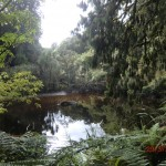 toller Regenwald-Walk, Ship Creek: Sumpflandschaft