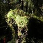 toller Regenwald-Walk, Ship Creek: Sonneneinfälle