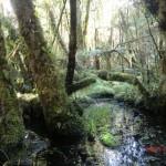 toller Regenwald-Walk, Ship Creek: unberührt