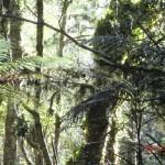 toller Regenwald-Walk, Ship Creek: Farne