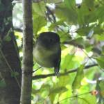 Robin am Zweig