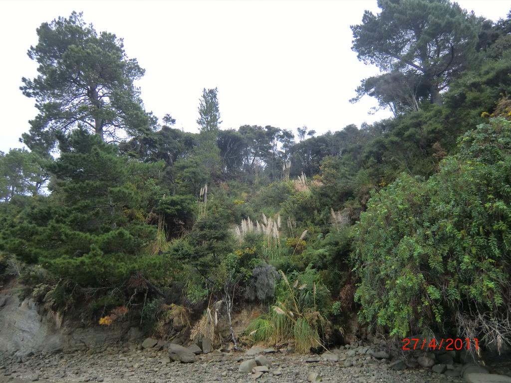 Natur der Westcoast Aucklands
