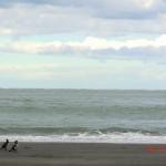 traumhafter Whatipu Beach am Vormittag III