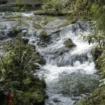 Walk zum Upper Huia Dam II