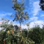 australische Pflanzenwelten