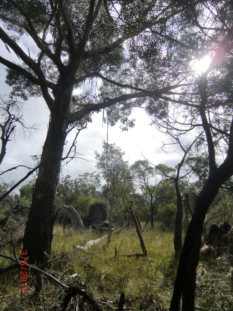 australische Busch-Vegetation