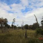australische Busch-Vegetation V