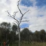 australische Busch-Vegetation VI