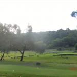 ganzer Golfplatz voller Känguruhs, in Anglesea