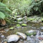 Bächlein unterhalb der Erskine Falls, könnte auch durchaus in NZ sein
