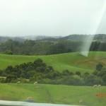 hier führt die Meeresstraße einige Kilometer durch Weideland... auch fast wie NZ