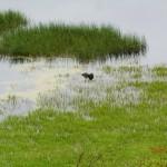 Tower Hill Sumpfgebiet und Vögelchen