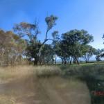Fahrt durch australische Weiten zu den Grampians VI