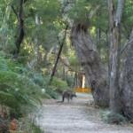 Nachmittagswanderung ab Halls Gap in den Grampians - wildes Känguruh!