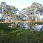 Park Stawell