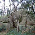 Langi Ghiran State Park: Aborigine Rock Art - Steinbatzen II