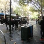 große Melbourne-Stadtführung - mit Matt zu Fuß unterwegs III
