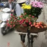 Blumenverkäuferin in Hanoi