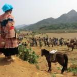 Bac Ha Sonntagsmarkt, Flower Hmongs und Pferde