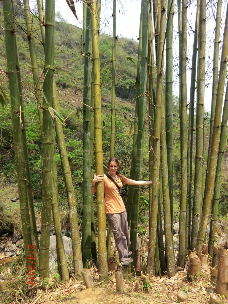 Trekking von Sapa nach Cat Cat Village, großer Bambus