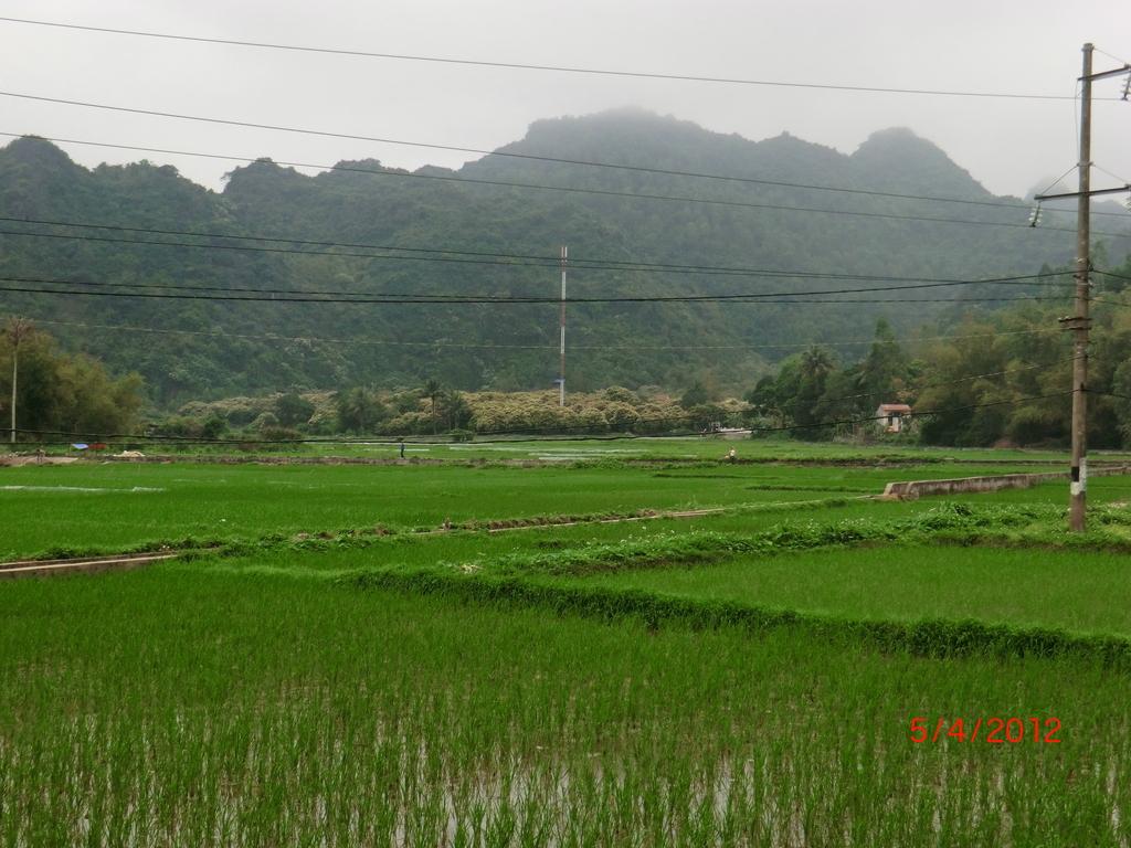 Reisfeld auf Cat Ba