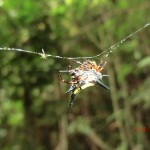 süße Spinne mit vielen Zacken