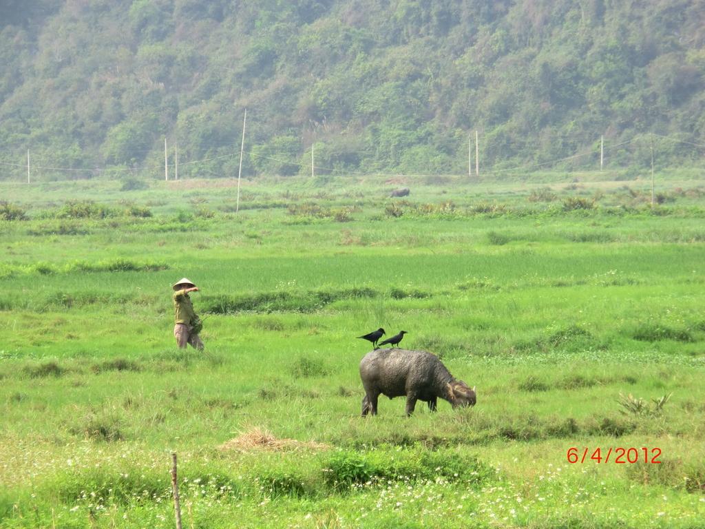 Wasserbüffel und Feldarbeiter, Cat Ba